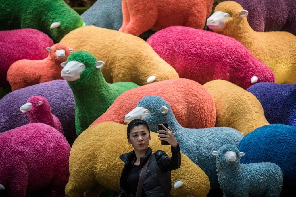 afp.15.02.18. - Hongkong, Kína: szelfi bárányokkal a kínai újév ünnepén - 7képei