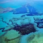Már 17 delfin pusztult el Mauritius partjainál