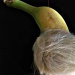 Pálinkás fanszőrt is itattak a gólyákkal