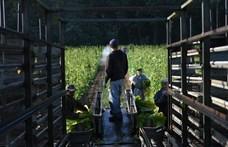 Eső- és pénzhiány: nem kapták meg az előleget, nagy bajba kerültek a gazdák