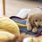 Ráuntunk az emberekre: pörögnek a kutyainfluencerek Instagramon