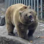 Elképesztő videó: fuldokló varjút ment meg a Fővárosi Állatkert medvéje