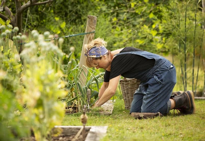 ¿Cómo puede combatir las plagas del jardín si evita los productos químicos?