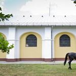 Kiderült, hogy a lovak felismerik és értik az emberi érzelmeket