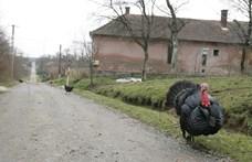 Örülhetnek a fideszes polgármesterek, a kormány ismét átvállalta az adósságukat