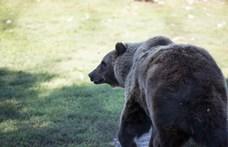 Egy játszótéren is látták a miskolci medvét