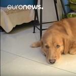 Táppénzre mehet egy olasz nő, hogy beteg kutyáját gondozza