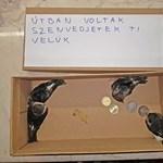 Harminc forinttal hagyott valaki négy kisfecskét a tűző napon a madármentőknél