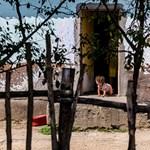 Habitat for Humanity: A kormány az út szélén hagyja, akinek nincs pénze lakáshitelre