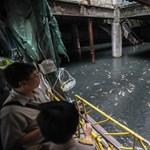 Horgásztóvá változott egy elhagyatott pláza Thaiföldön – fotó