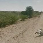 A Google Street View legsokkolóbb képei