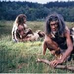 A lustaság okozhatta a Homo erectus vesztét