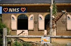 Bajban van a londoni állatkert, David Attenborough-t hívták segítségül