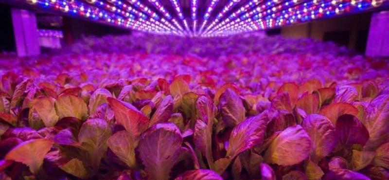 Hogy áll most a függőleges növénytermesztés? Íme két feltörekvő cég példája!