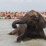 Mi még nem láttunk tengeri elefántmentést, de szerintünk ön sem - videó