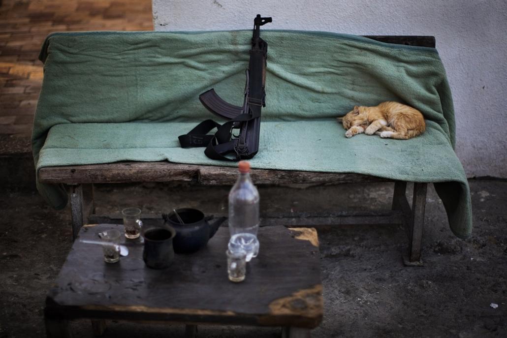 AP. Macska alszik egy kalasnyikov mellett Gázában a Hamasz egyik ellenőrzőpontján. - hét képei nagyítás
