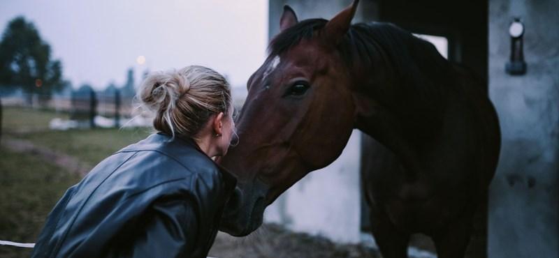 Kutatók kipróbálták, hogy reagálnak a lovak, ha úgy beszélnek hozzájuk, mint a kisgyerekekhez