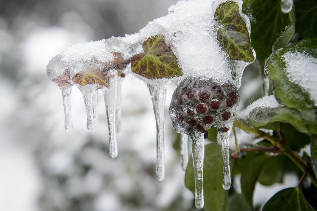 mti. ónos eső, jegesedés, tél 2014, 2014.12.02. Nógrád megye, Salgótarján, Ónos esőtől eljegesedett növények Salgótarján Rónabánya városrészében 2014. december 3-án.