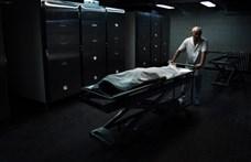 Tragikus testrablós horrorsztoriba keveredett egy brit család