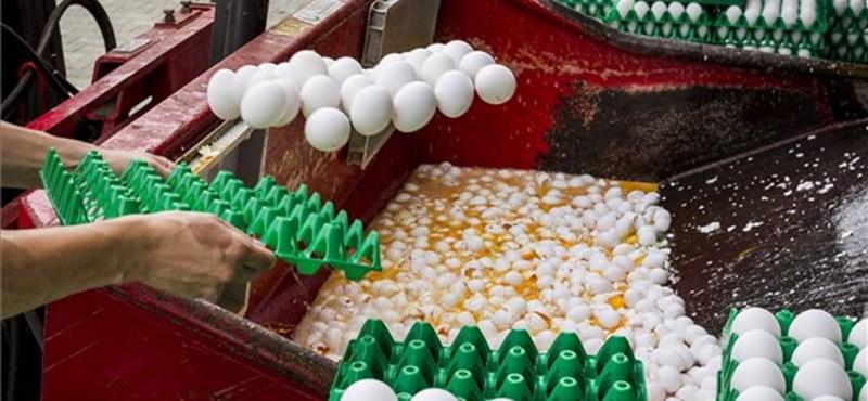 Újra szennyezett tojást találtak Európában