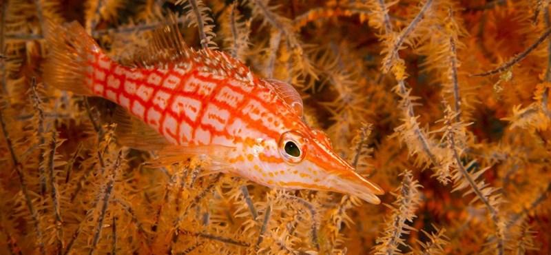 A turisták naptejétől pusztulnak a korallok egy thaiföldi strandon
