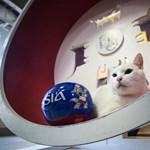 Süket macska jósolja meg az oroszországi focivébé meccseinek győztesét