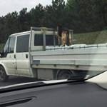Ki az, aki egy kutyát kiköt a platós kocsijára és úgy megy az M7-esen?