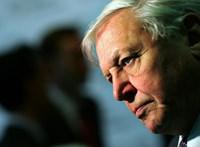 Sir David Attenborough is üzent a G7-vezetőknek