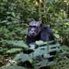 The Times: Tanulhatnának a majmoktól a korrupt politikusok