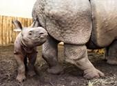 Hahó Fészbukosok, megvan Orbán rinocéroszának a neve!