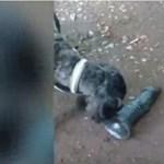 Mindenki szakadt a röhögéstől, amikor meglátták, mit talált a kutya - videó