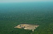 2008 óta nem volt ilyen nagymértékű erdőirtás Amazóniában