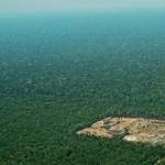 Aprócska, de nagyszerű hír jött a lángoló Amazonasból