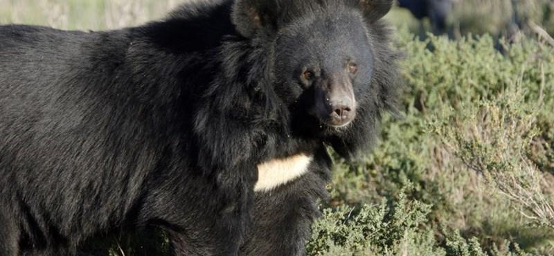 Mit tegyünk, ha szembejön a medve?