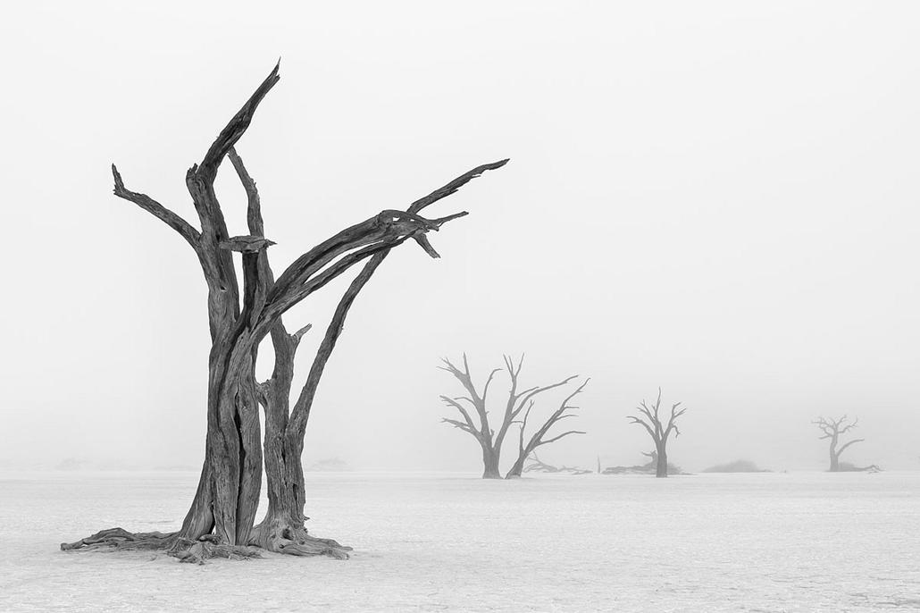 NE használd_! - Photographer of the Year 2014 - ''Föld, levegő, tűz, víz'' kategória - Legjobb sorozat - Deadvlei, Namíb Naukluft Nemzeti Park, Namíbia - tpoty