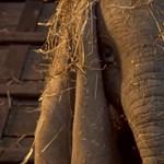 Itt az első trailer Tim Burton Dumbójához
