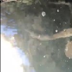 A medúza után most egy jókora polip tévedt be a járvány miatt kiürült Velencébe