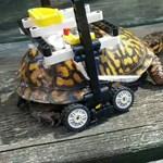 Ennél szívmelengetőbb már nem lesz a héten: legóból építettek spéci kerekesszéket a sérült teknősnek – videó