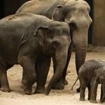Kétszáz elefántot költöztet Mozambikba a világ legnagyobb gyémánttermelője