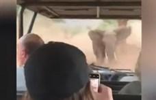 Hajmeresztő videó készült egy turistákat üldöző dühös elefántról