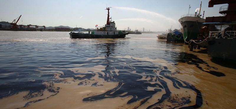 Transzneművé válnak az édesvízi hím halak a vízbe kerülő mérgektől