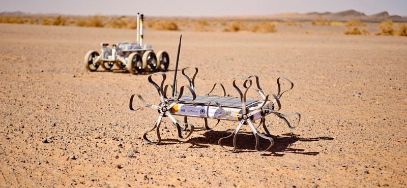 Hazaugat a Holdról a robotkutyánk