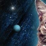 Elpusztult az internet egyik leghíresebb macskája