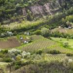 Magyar a világ legdrágább bora, 11 millió forint egy palack
