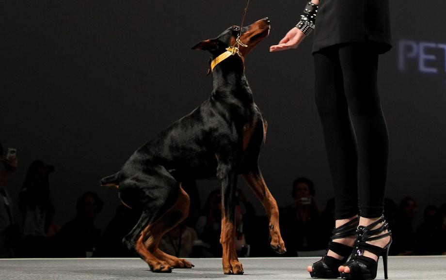 Kutyamodellek a kifutón – Nagyítás fotógaléria