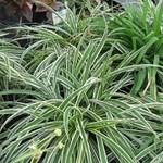 3 strapabíró szobanövény, ami túléli a kezdő kertészeket is