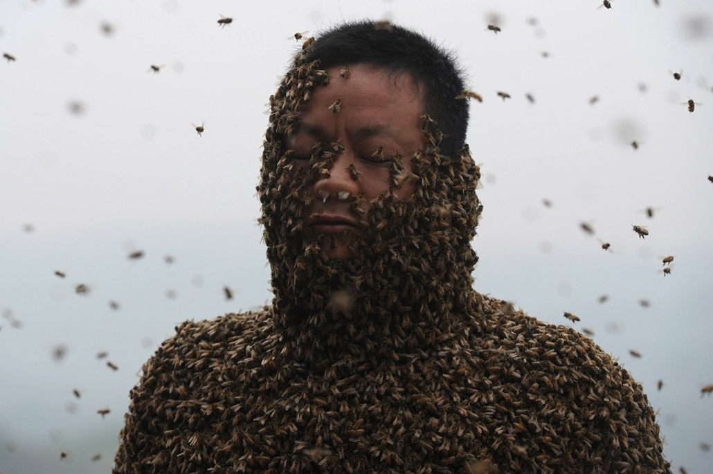 afp. hét képei - 2014.04.09. CHINA, Chongqing : This picture taken on April 9, 2014 shows She Ping, a 34 year-old local beekeeper, covered with a swarm of bees on a small hill in southwest China's Chongqing. She Ping released more than 460,000 bees, attra