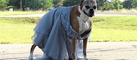 Elmaradt a ballagása, de szervezett egy sajátot a kutyájával