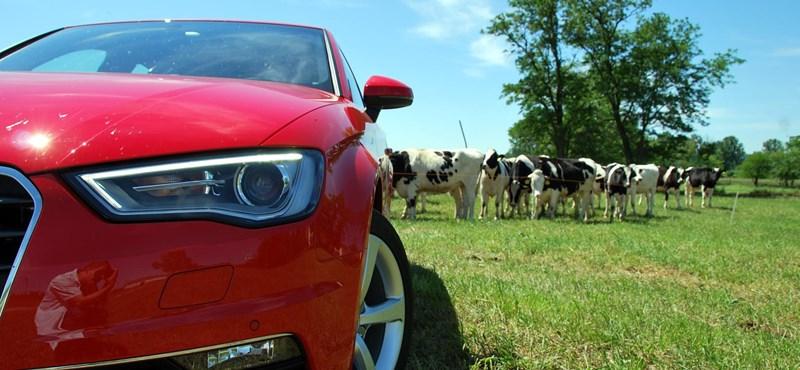 Betyár lett a magyar Audi – vezettük