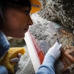 Megfejtették, hová menekültek pompeji túlélők